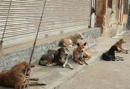 چرا هنوز قانون حمایت از حیوانات تصویب نشده است؟