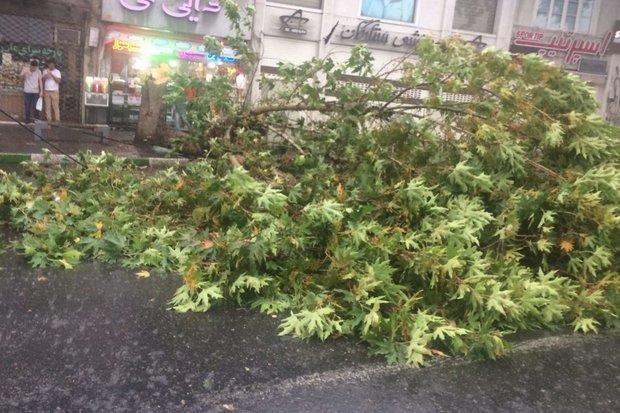 طوفان شدید در گلستان سبب قطع درختان و خسارت به تأسیسات برق شد